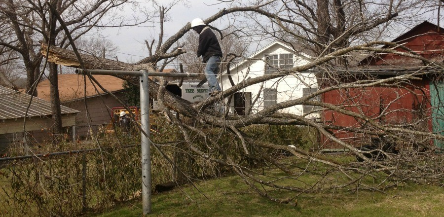 Winter Weather Brings High Winds, Storms and Tree Damage