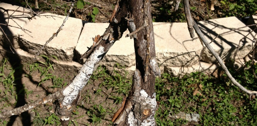 Proper Maintenance Keeps Trees From Developing Dangerous Fungus