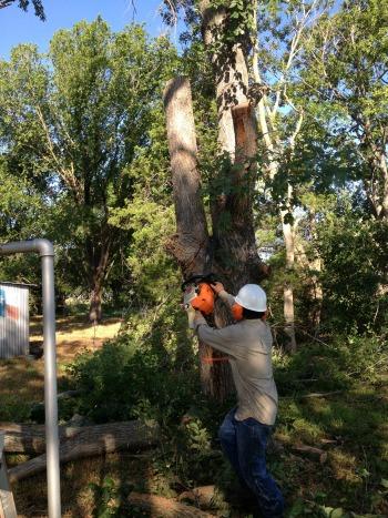 Cutting Down Damaged Trees