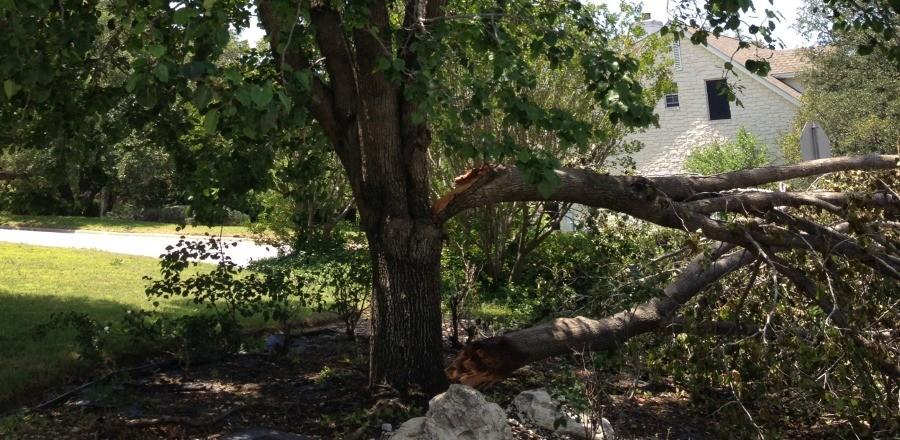 Is My Tree or Parts Of My Tree Hazardous?