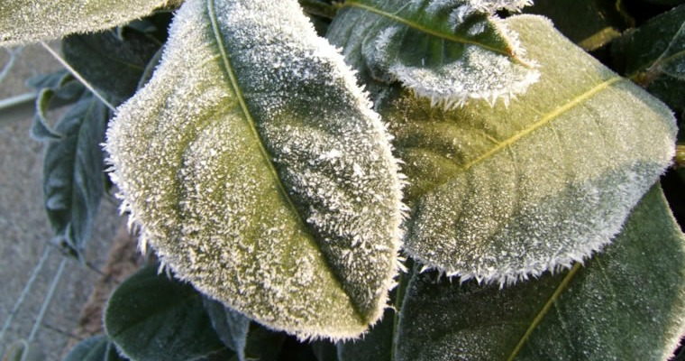 How To Protect Your Plants From Frost Damage