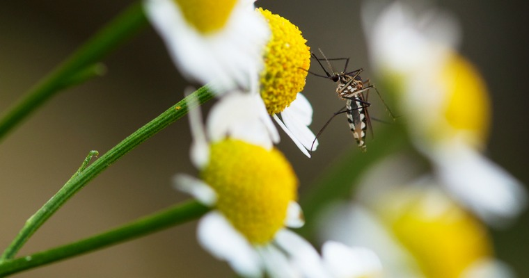 Controlling Mosquitoes In Your Garden