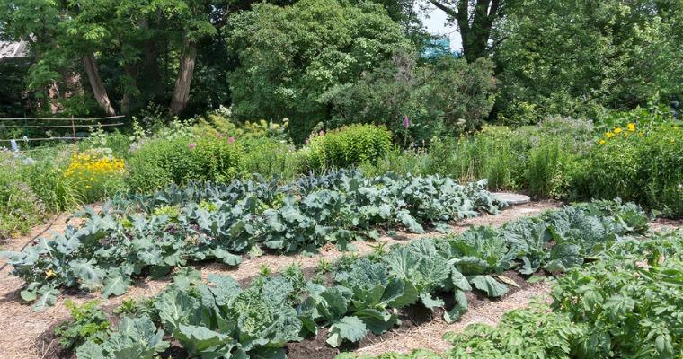 3 Tilling Tips For a Healthier Garden