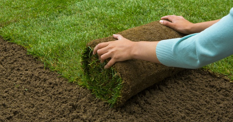 Pros and Cons of Using Sod to Start Your Lawn
