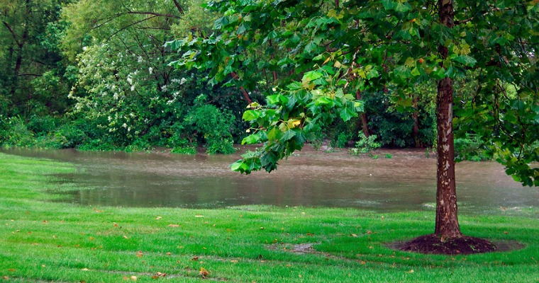 Dealing With a Waterlogged Yard