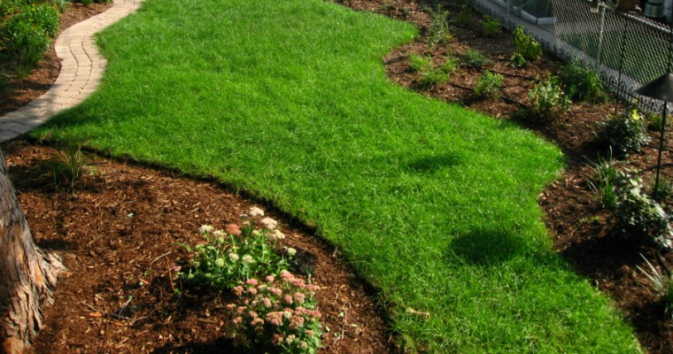 Protecting Your Lawn from the Summer Sun