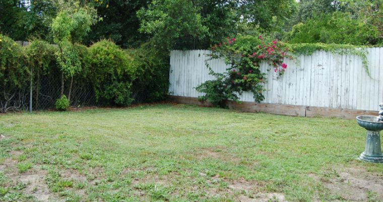 Dealing With a Patchy Lawn