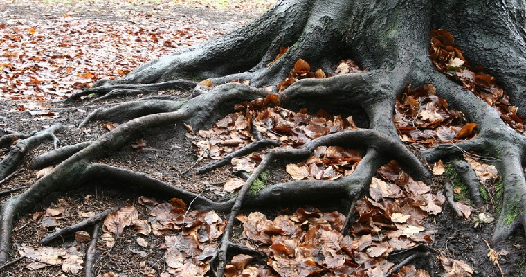 How to Deal with Exposed Tree Roots