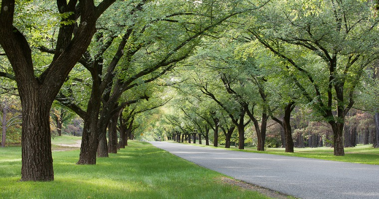 Caring for Your Trees' Crown Canopy
