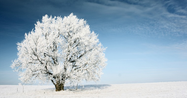 Caring for Your Trees During the Winter
