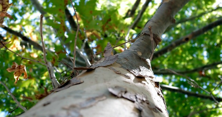5 Signs of a Dead Tree on Your Property