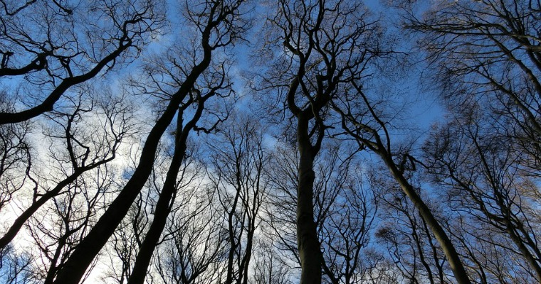 Caring for Your Trees During a Drought