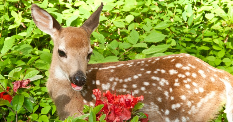 How To Protect Your Landscape From Deer The Woodsman