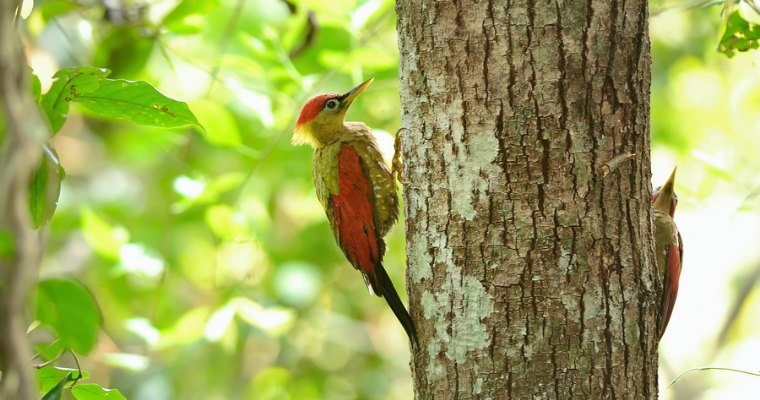 How to Protect Your Trees from Woodpeckers