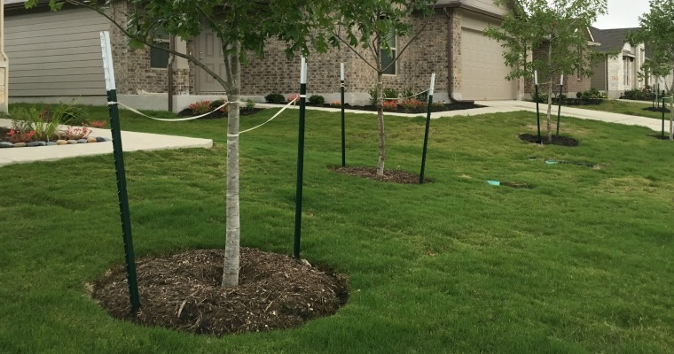 How to Protect a Young Tree from Wind Damage