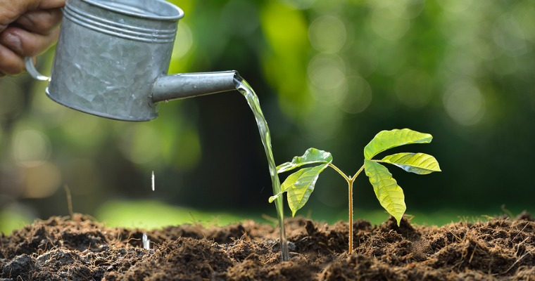 Tips on Watering Newly Planted Trees