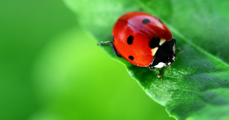 Pest Control in the Garden: How to Keep Aphids at Bay
