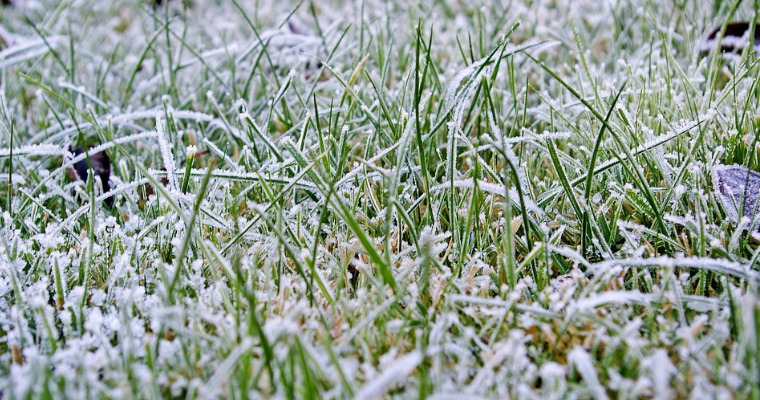 Cool Season vs Warm Season Grass: What's the Difference?