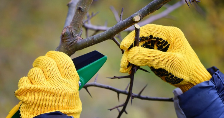 6 Tips for Effective Tree Pruning