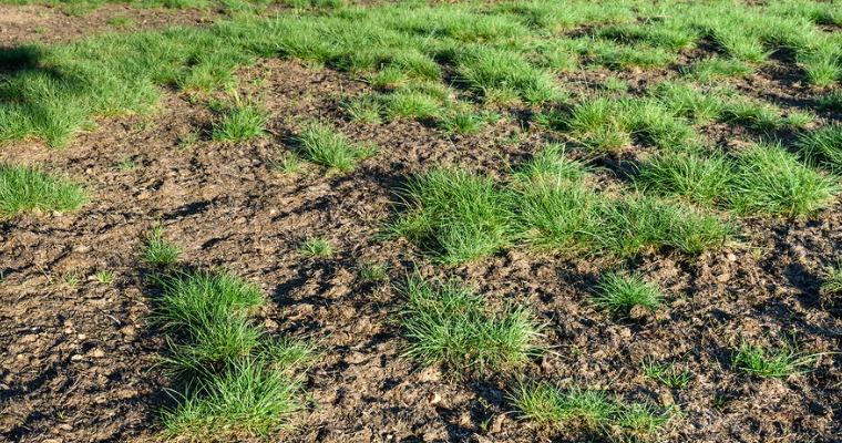 What You Should Know about Soil Erosion and Your Lawn