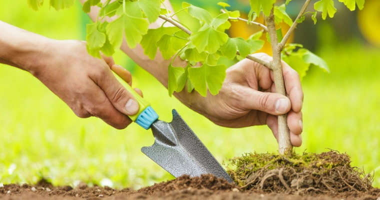Tree Planting: 5 Tips for a Picture-Perfect Landscape