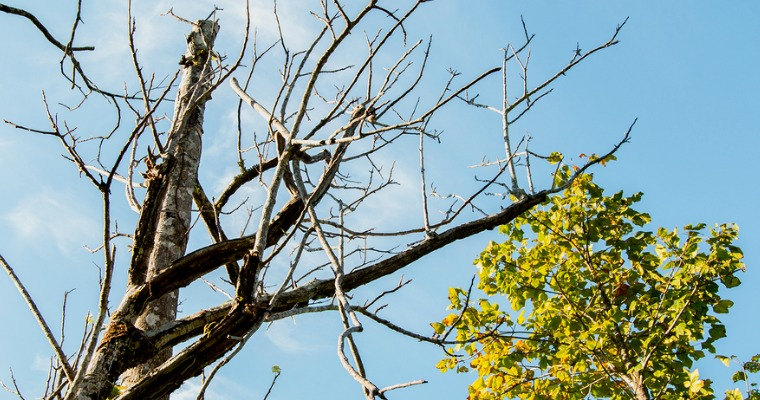 Are Dead/Dying Trees Really a Problem for Homeowners?
