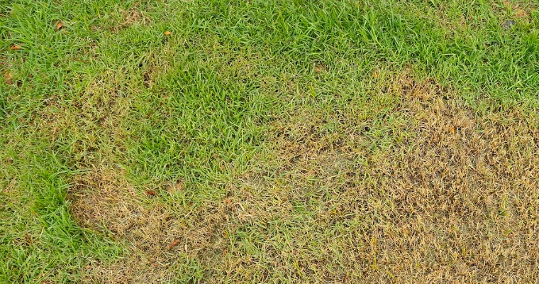 5 Common Causes of Brown Grass