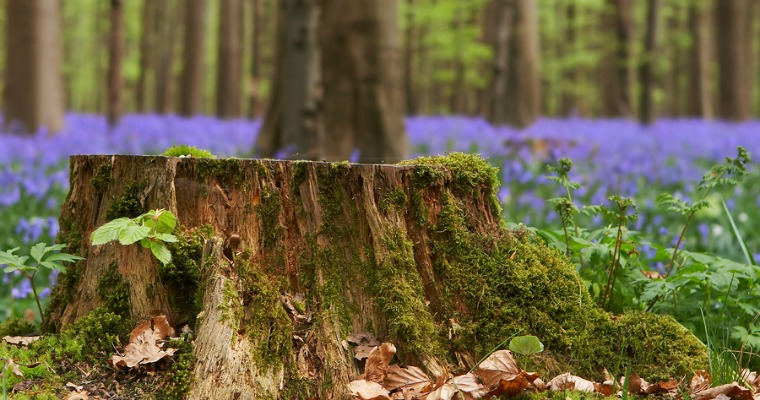 How Chemical Tree Stump Removal Works