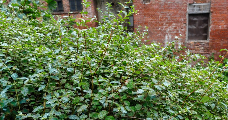 How to Prevent Shrubs from Growing Back