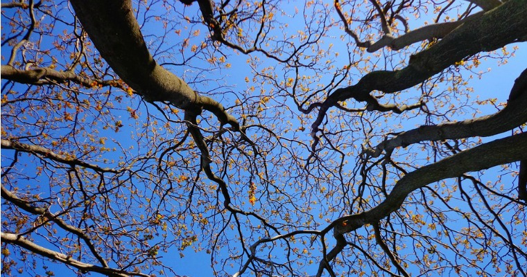 6 Signs That a Tree Should Be Removed