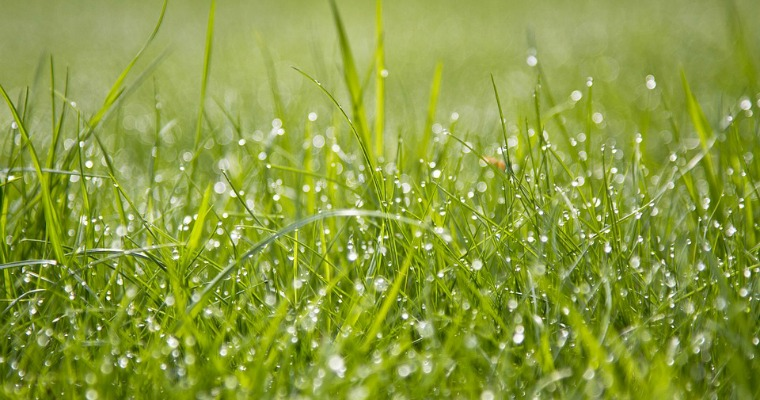 How to Protect Your Lawn From the Summer Heat