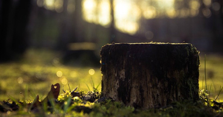 5 Things You Didn't Know About Tree Stumps