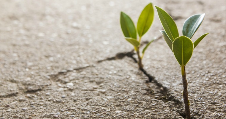 How to Prevent Weeds from Growing in Driveway Cracks