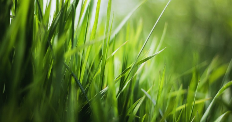 How to Protect Your Lawn From Fungus
