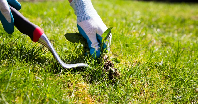 5 Tips for a Weed-Free Lawn