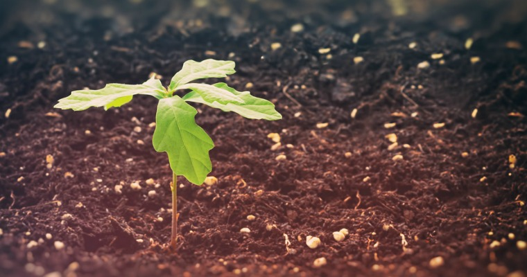 How to Prevent Oak Tree Sprouts