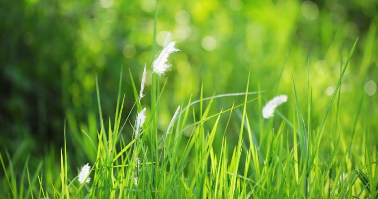 How to Keep Grass Seed From Blowing Away
