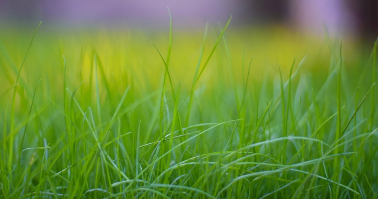 How to Keep Your Lawn Green During a Drought