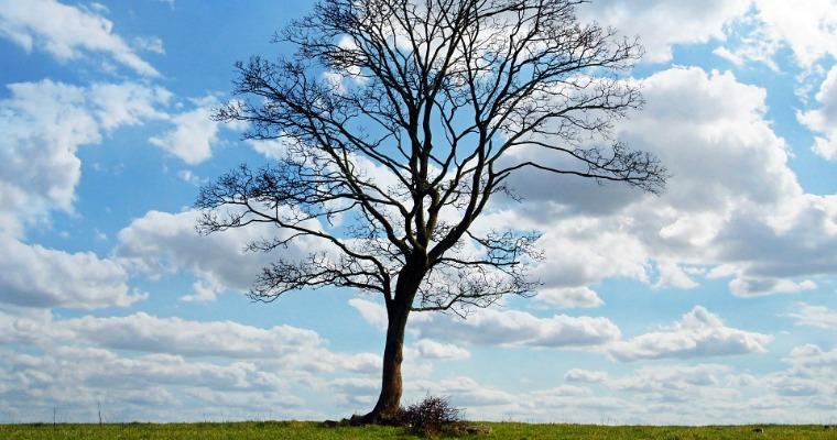 Why Won't My Tree Break Dormancy?