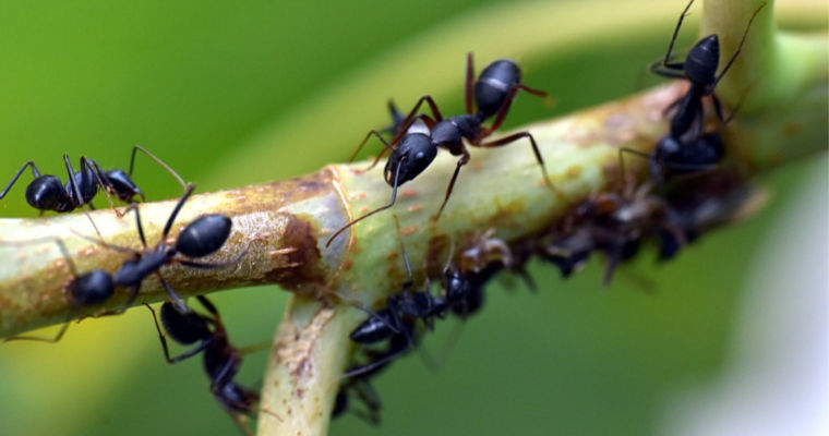 How to Protect Your Trees From Carpenter Ants
