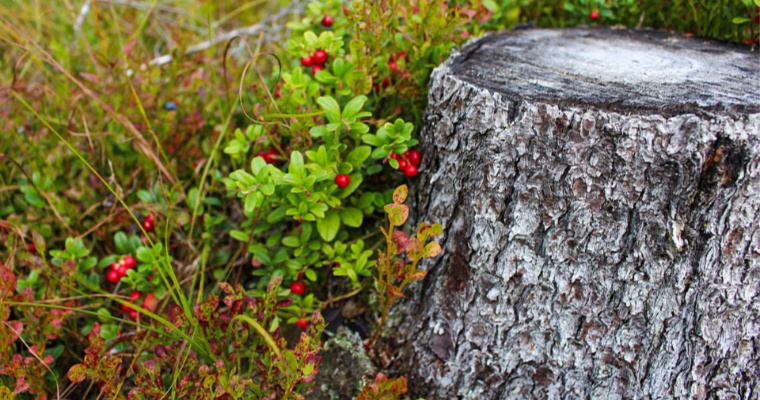 Can You Prevent a Tree Stump From Rotting?