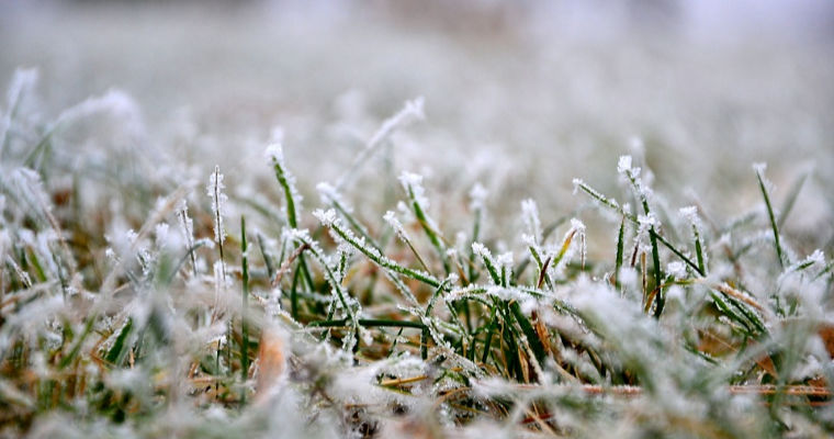 5 Tips to Prevent Your Lawn From Dying During Winter