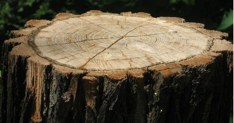 How to Prevent a Tree Stump From Regrowing