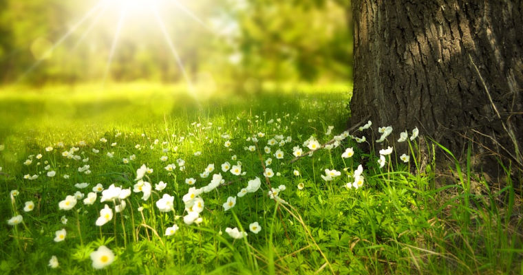 How to Minimize Tree and Plant Pollen in Your Landscape