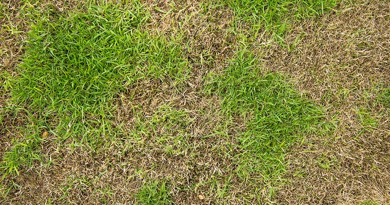 4 Common Fungal Diseases Affecting Lawns