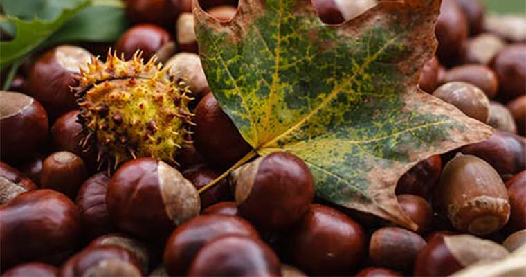 How to Deal With Fallen Acorns in Your Landscape