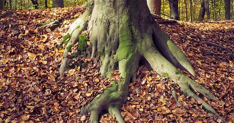 How to Prevent Tree Roots From Growing Above Ground