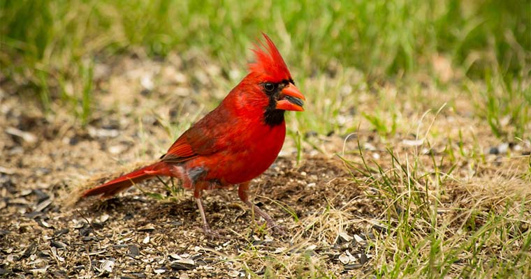 6 Tips to Stop Birds From Eating Grass Seed